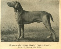 Веймар1